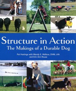Structure In Action The Makings Of A Durable Dog