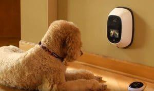 5 Best Dog Camera Reviews