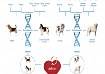 5 Best Dog DNA Tests (Reviews Updated 2021)