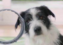 5 Best Dog Flea Collars (Reviews Updated 2021)