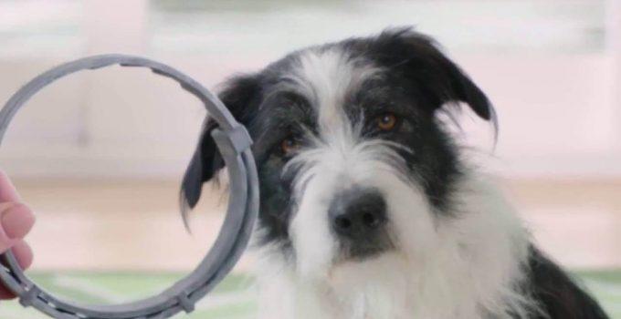 5 Best Dog Flea Collar Reviews