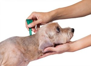 5 Best Dog Flea Treatment Reviews