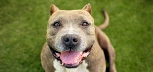 5 Best Dog Food For Pitbulls Reviews