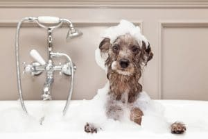 5 Best Dog Shampoo Reviews