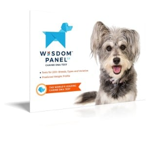 5 Best Dog DNA Test Reviews (Updated 2019) 5