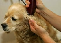 5 Best Dog Grooming Clipper Reviews