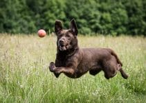 5 Best Dog Joint Supplements (Reviews Updated 2021)