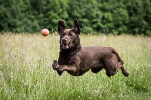 5 Best Dog Joint Supplement Reviews