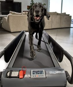 5 Best Dog Treadmill Reviews