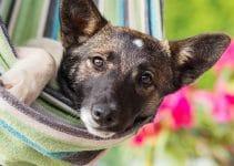 5 Best Essential Oils For Dog Fleas Reviews