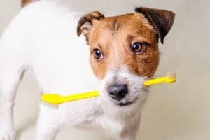 5 Best Toothbrushes For Dogs Reviews