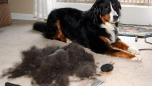 5 Best Vacuums For Dog Hair Reviews