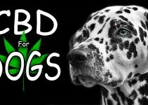 5 Best CBD Oils for Dogs (Reviews Updated 2021)