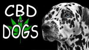 5 Best Cbd Oil For Dogs Reviews