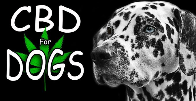 5 Best Cbd Oil For Dogs Reviews
