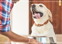 5 Best Dog Food Brand Reviews