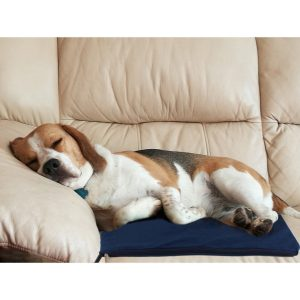 5 Best Dog Heating Pad Reviews