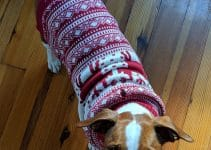 25 Best Dog Sweaters (Reviews Updated 2021)