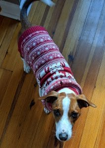 5 Best Dog Sweater Reviews