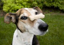 5 Best Dog Treats (Reviews Updated 2021)