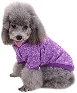 Fashion Focus On Pet Dog Clothes