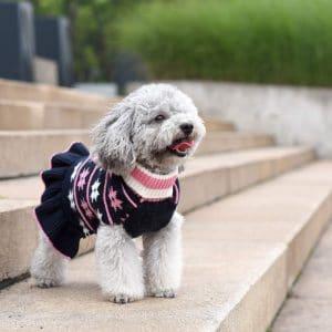 Kyeese Fashion Dog Sweater