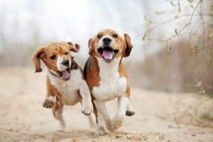 5 Best Dog Food For Beagles Reviews