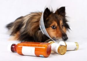 5 Best Medications For Dogs Reviews