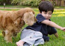 10 Best Small Dog Breeds For Children