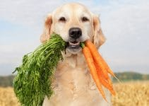 10 Healthiest Human Foods For Dogs