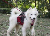 27 Best Dog Backpacks (Reviews Updated 2021)