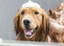 5 Best Dog Bath Tub Reviews