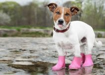 30 Best Dog Boots (Reviews Updated 2021)