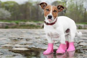 5 Best Dog Boots Reviews