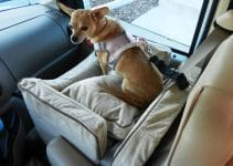 5 Best Dog Car Seats (Reviews Updated 2021)