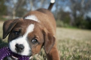 5 Best Dog Chew Toy Reviews