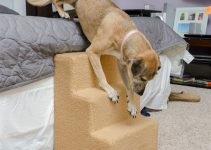 5 Best Dog Steps And Stairs Reviews