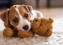 5 Best Puppy Toys (Reviews Updated 2021)