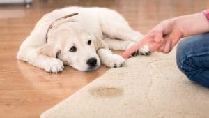 5 Best Stain And Odor Remover For Dogs Reviews