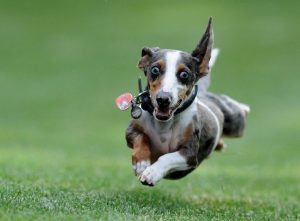 5 Best Toys For Hyper Dogs Reviews