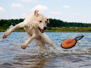 5 Best Water Toys For Dogs Reviews