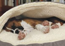 5 Best Covered Dog Bed Reviews