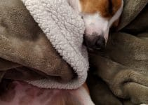 5 Best Dog Blanket Reviews