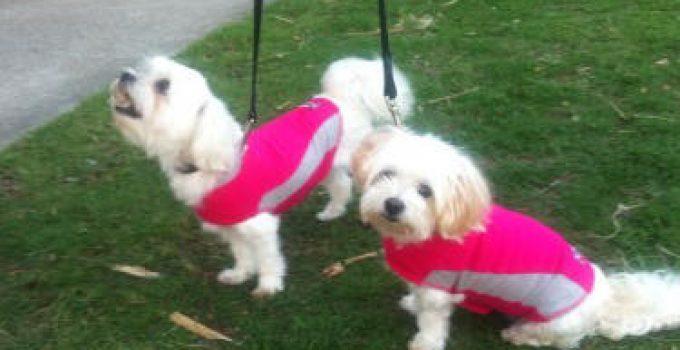 5 Best Dog Calming Apparel Reviews