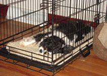 5 Best Dog Crate Mats (Reviews Updated 2021)