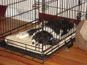 5 Best Dog Crate Mat Reviews