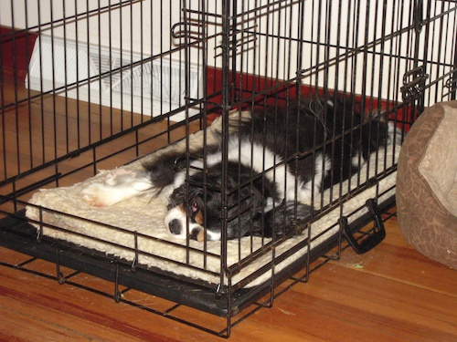 5 Best Dog Crate Mat Reviews Updated 2019 Dog Product