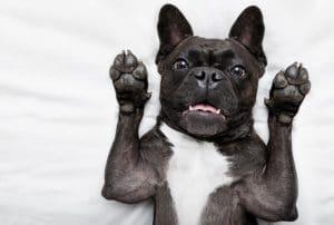 5 Best Dog Deodorizer Reviews