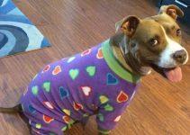 5 Best Dog Pajamas (Reviews Updated 2021)