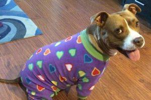 5 Best Dog Pajama Reviews